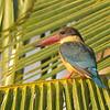stork bill